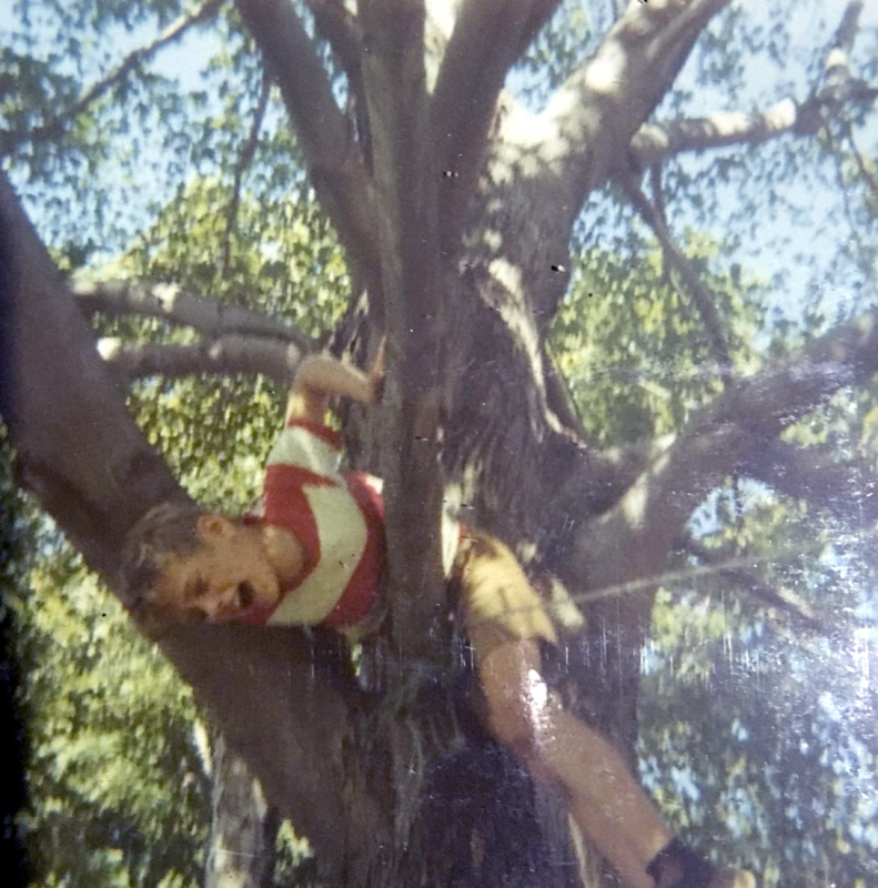Bobby stuck in a tree